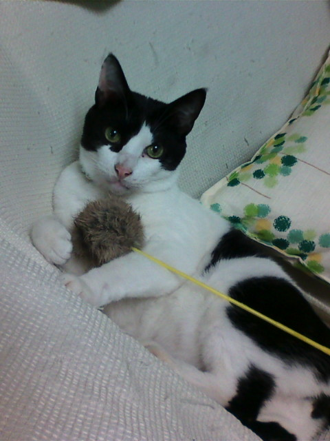 猫猫猫猫猫猫猫猫猫